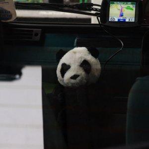 PandaCamp5.jpg