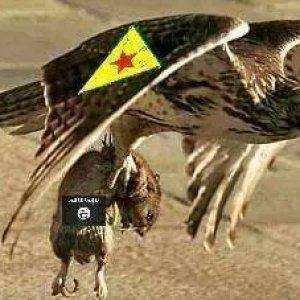 PKG_eagle-ISIS_rat.jpg