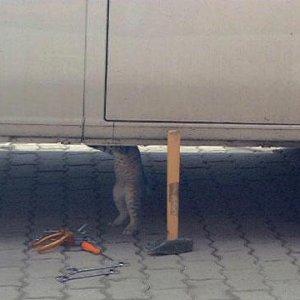 cat_under_car.jpg
