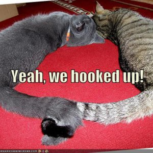funny-pictures-cat-holding-tails.jpg