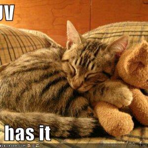 funny-pictures-cat-hugs-stuffed-bear.jpg