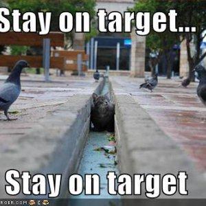 funny-pictures-cat-pidgeons-star-wars.jpg