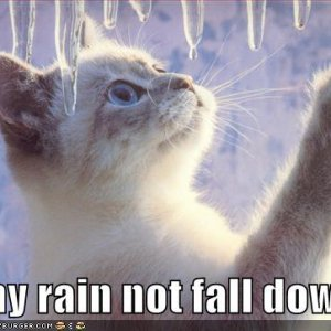 funny-pictures-cat-plays-with-icicles.jpg