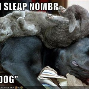 funny-pictures-cat-sleeps-dog-bed.jpg