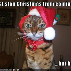 funny-pictures-cat-stops-christmas.jpg
