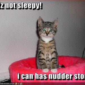 funny-pictures-kitten-bedtime-story.jpg