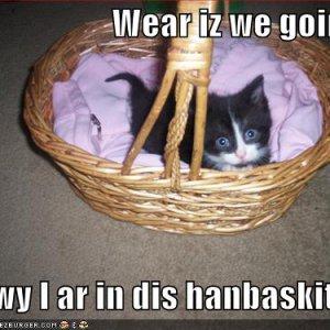 funny-pictures-kitten-handbasket1.jpg