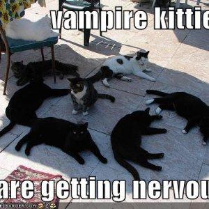 funny-pictures-vampire-cats-shade-sunlight.jpg