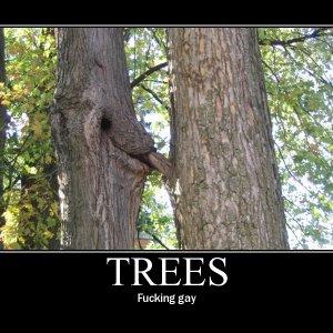 gaytree.jpg