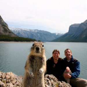 13814_squirrel.jpg